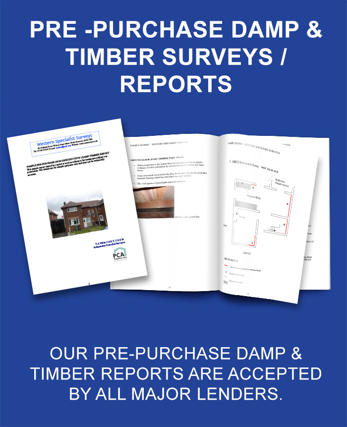 Damp & Timber Report