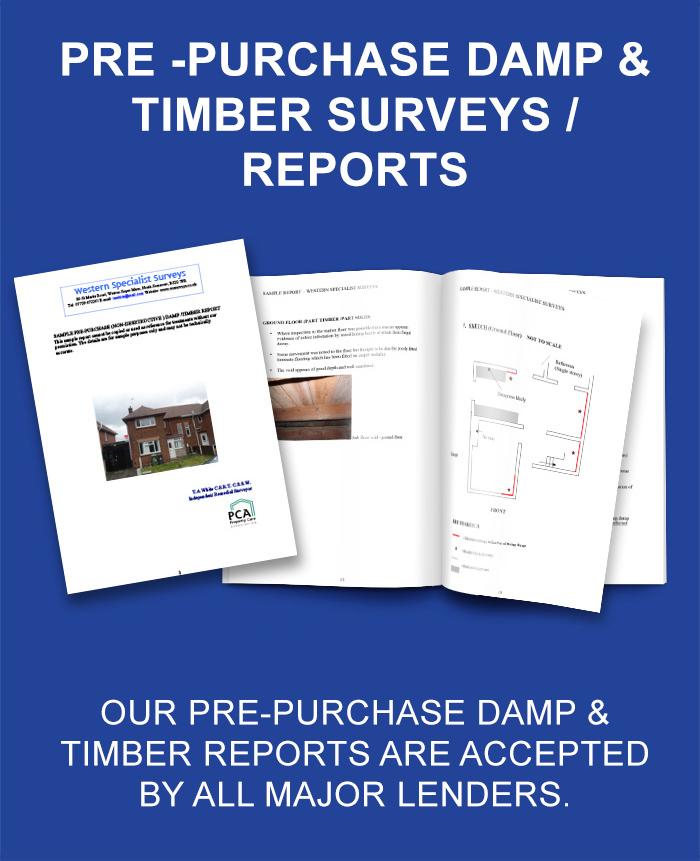 Damp & Timber Report